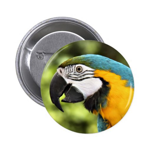 Macaw Pinback Buttons