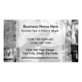 macaw bird bw animal image pack of standard business cards