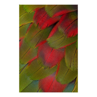 Macaw Breast Feather Design Poster
