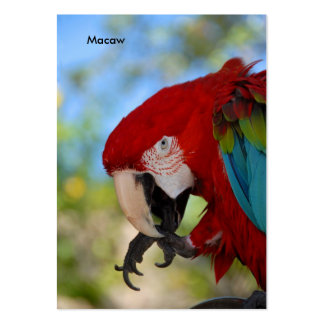 Macaw Business Card Templates