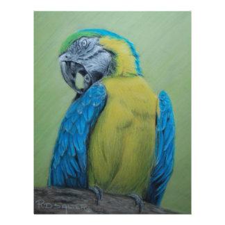 Macaw Flyers