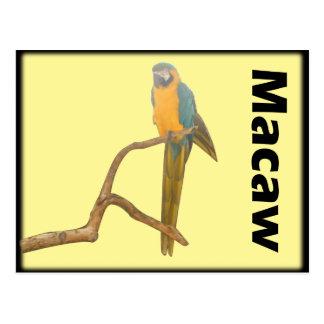 Macaw III Postcard