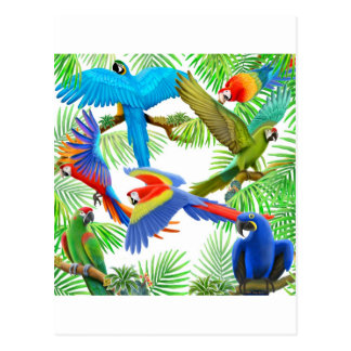 Macaw Jungle Postcard