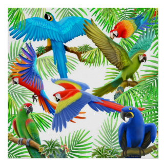 Macaw Jungle Poster