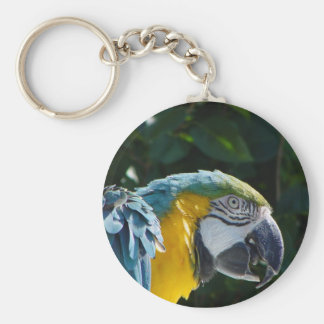 Macaw Key Chain