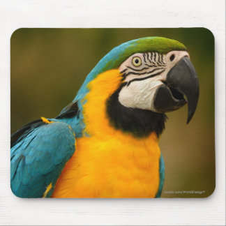 macaw mouse mat