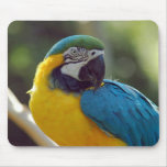 Macaw Mousemats