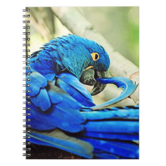 Macaw Notebook