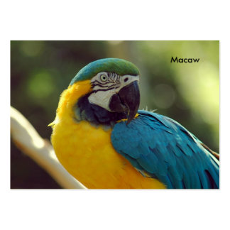 macaw pack of chubby business cards