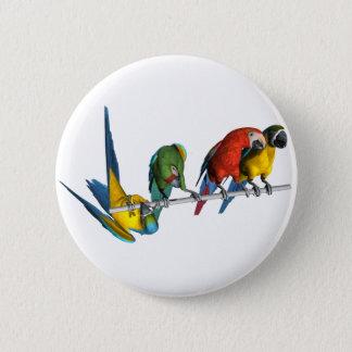 Macaw Parrot 6 Cm Round Badge