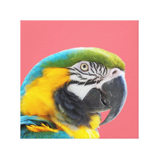 Macaw parrot animal exotic tropical photo canvas print