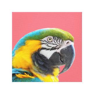 Macaw parrot animal peekaboo tropical photo canvas print