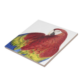 Macaw Parrot Bird Wildlife Animal Tile