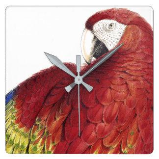 Macaw Parrot Bird Wildlife Animals Wall Clock
