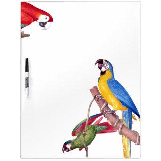 Macaw Parrot Bird Wildlife Dry Erase Board