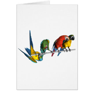 Macaw Parrot Card
