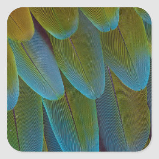 Macaw parrot feather pattern detail square sticker