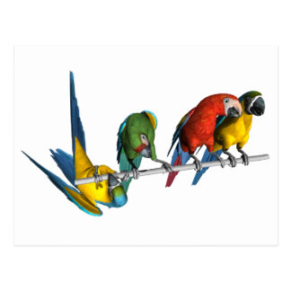 Macaw Parrot Postcard