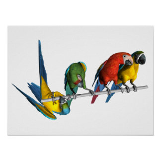 Macaw Parrot Posters