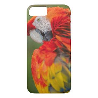 macaw phone case