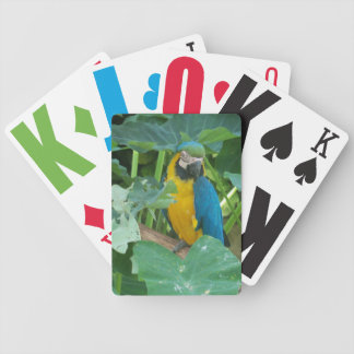 Macaw playing cards