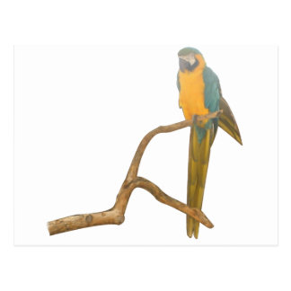 Macaw Post Card