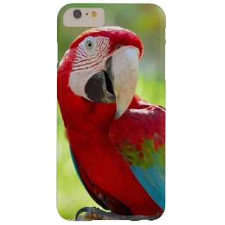 Macaw sitting on branch barely there iPhone 6 plus case