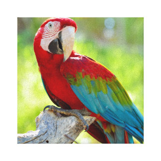 Macaw sitting on branch canvas print