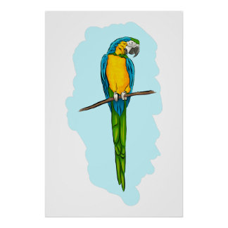 Macaw Sitting on Branch Poster