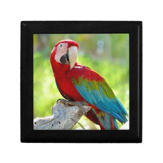 Macaw sitting on branch small square gift box