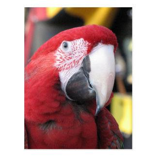 Macaw vertical postcard