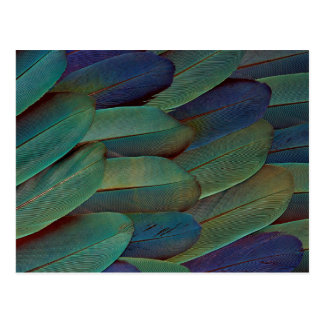 Macaw Wing Feather Pattern Postcard