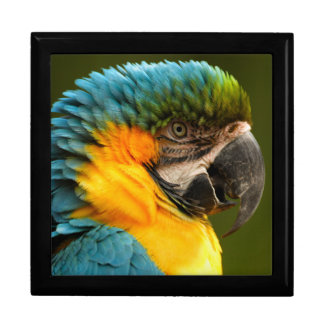 macaw yellow and gold jewelry box