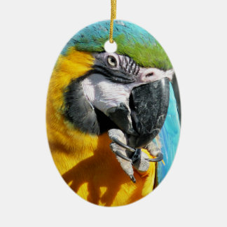 MACAWS CERAMIC OVAL DECORATION