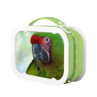 Macaws Lunch Box