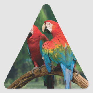Macaws on the wild triangle sticker