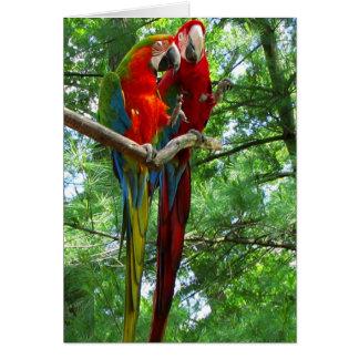 Macaws Pair Birthday Greeting Card