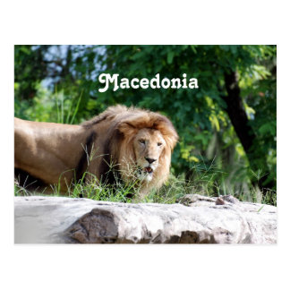 Macedonia Lion Postcard
