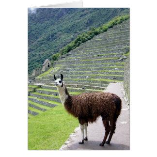 machu llama look greeting card