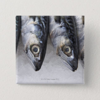 Mackerel fish, fresh catch of the day 15 cm square badge