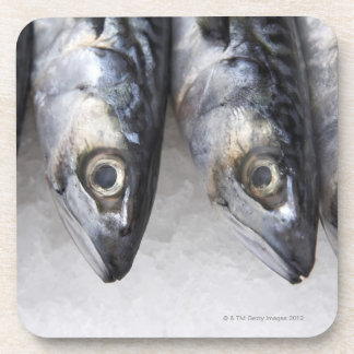Mackerel fish, fresh catch of the day coaster