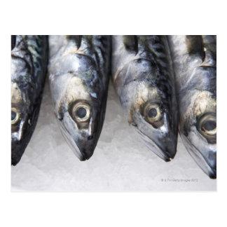 Mackerel fish, fresh catch of the day postcard