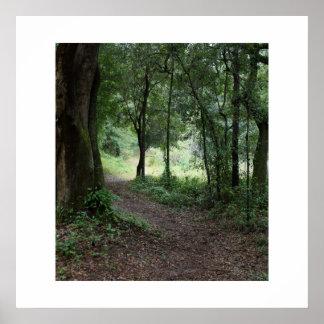 Maclay Gardens State Park Print