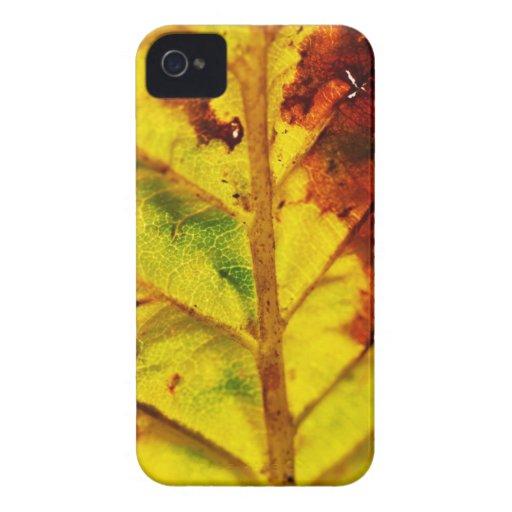 Macro Autumn Leaf Case-Mate iPhone 4 Cases