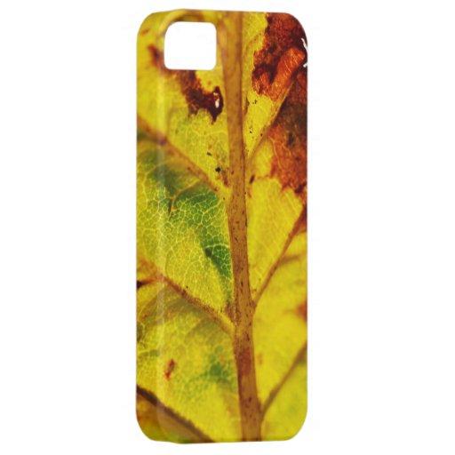 Macro Autumn Leaf iPhone 5/5S Cover