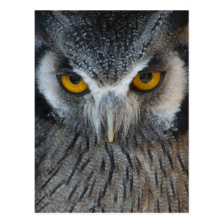 Macro Black and White Owl Postcard