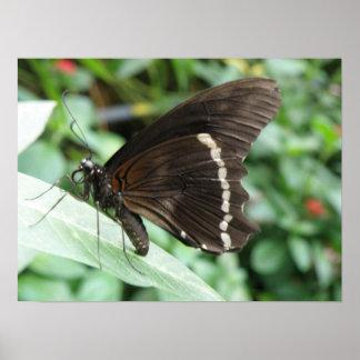 Macro Butterfly Print