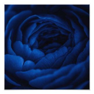 macro close up photography rose photo art