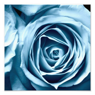 macro close up photography rose photo print