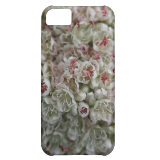 Macro Cluster of Tiny Flowers Case For iPhone 5C
